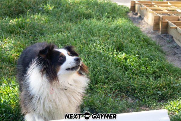nextgaymer-2019-04-20 (22)
